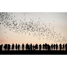 Oiseaux Et Personnes