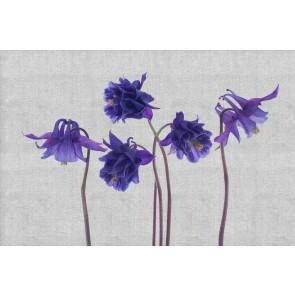 Fleurs Tricotées