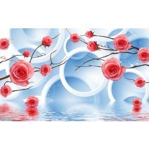 Roses Et Cercles