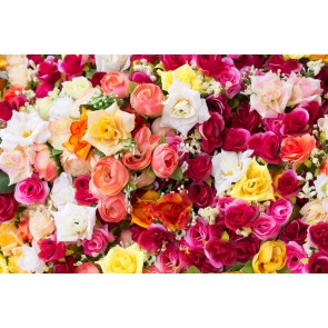 Roses Dans Toutes Les Couleurs