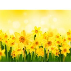 Soleil Et Fleurs