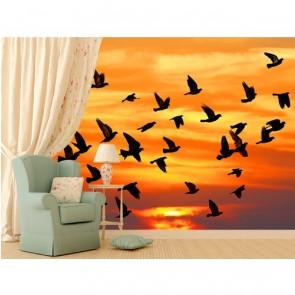 Bowling d'oiseaux à l'automne papier peint