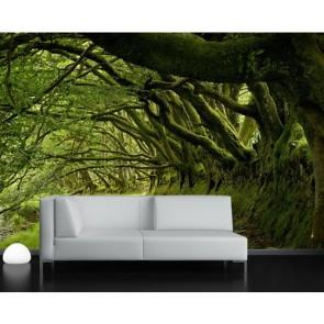 Entre les arbres papiers peints photo appliqué sur le mur