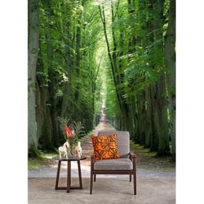 Chemin forestier caché papier peint 3d appliqué sur le mur