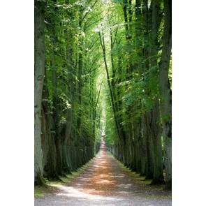 Chemin Forestier Caché