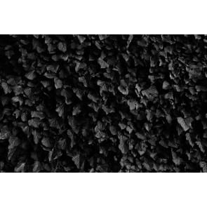 Feuilles Noires