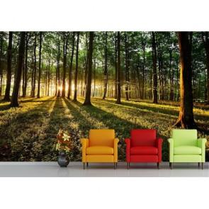 Forêt rougeoyante papiers peints photo appliqué sur le mur