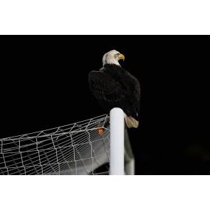 Atterrissage De L'aigle