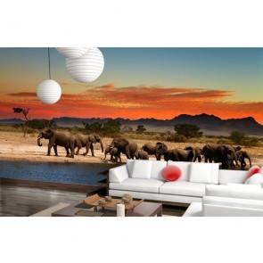 Éléphants au repos papiers peints photo appliqué sur le mur
