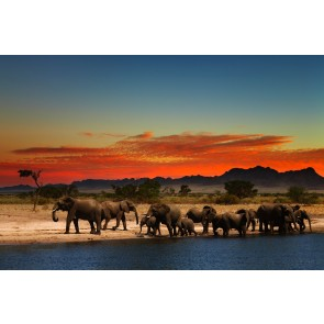 Éléphants Au Repos