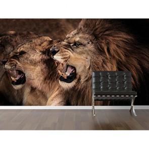 Lion rugissant papiers peints photo 3D appliqué sur le mur