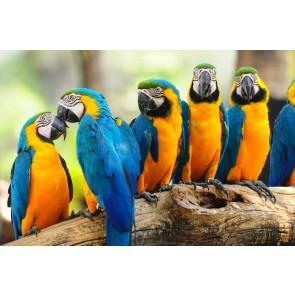Perroquets Jaunes Et Marins