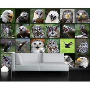 Langue des oiseaux decoration murale appliqué sur le mur