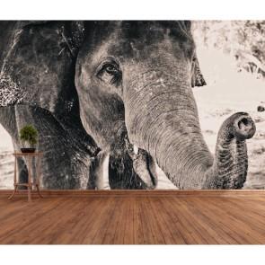 Éléphant en noir et blanc papier peint 3d appliqué sur le mur