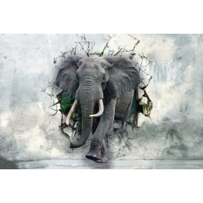 Éléphants Forts