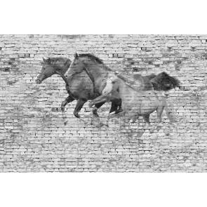 Mur Avec Des Chevaux