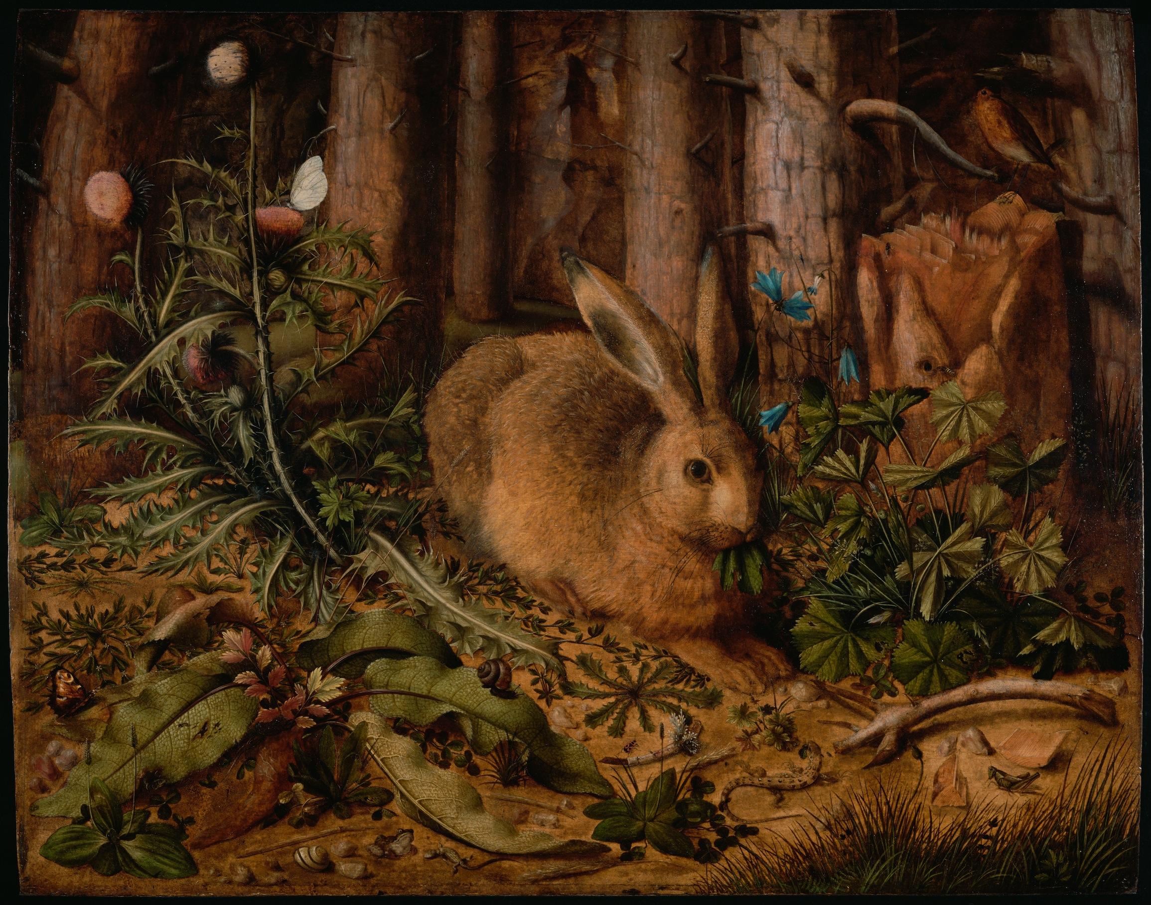 Lièvre dans la forêt decoration murale