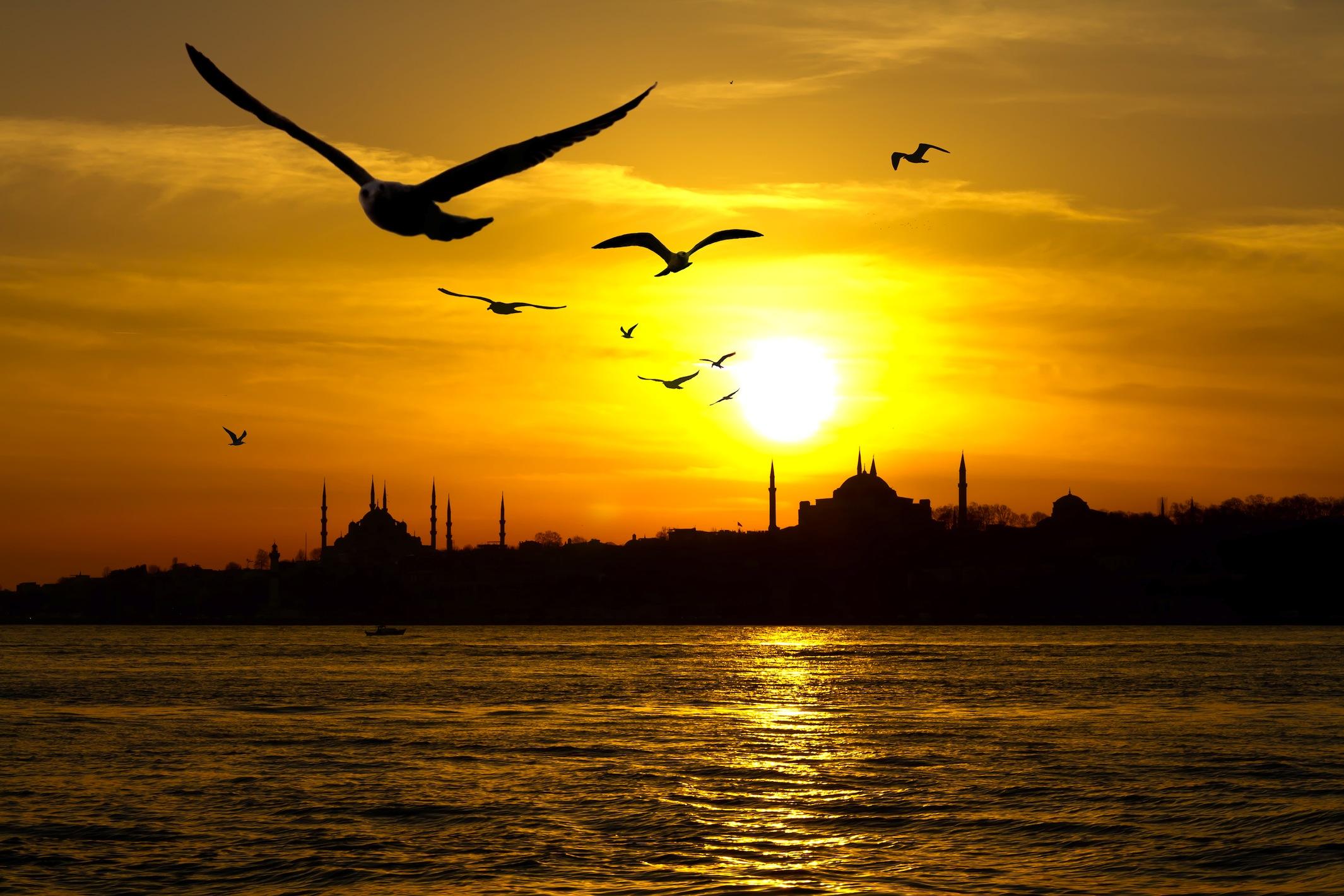 Mouettes d'Istanbul papiers peints photo