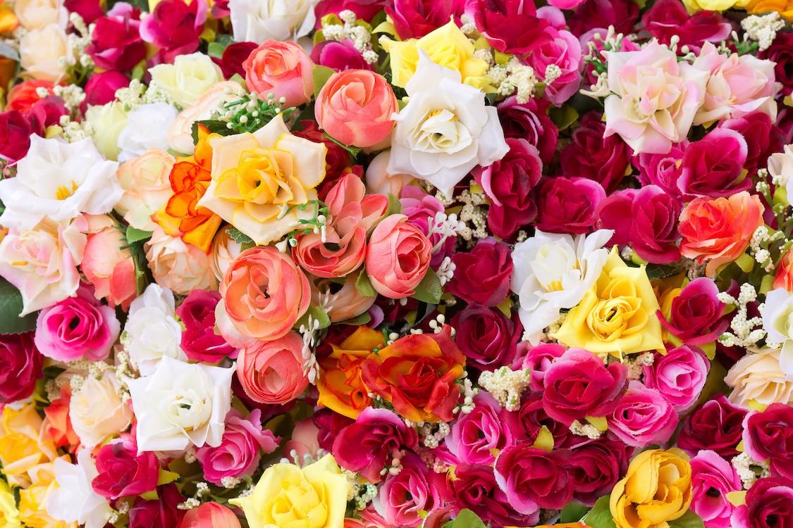 Roses dans toutes les couleurs papier peint