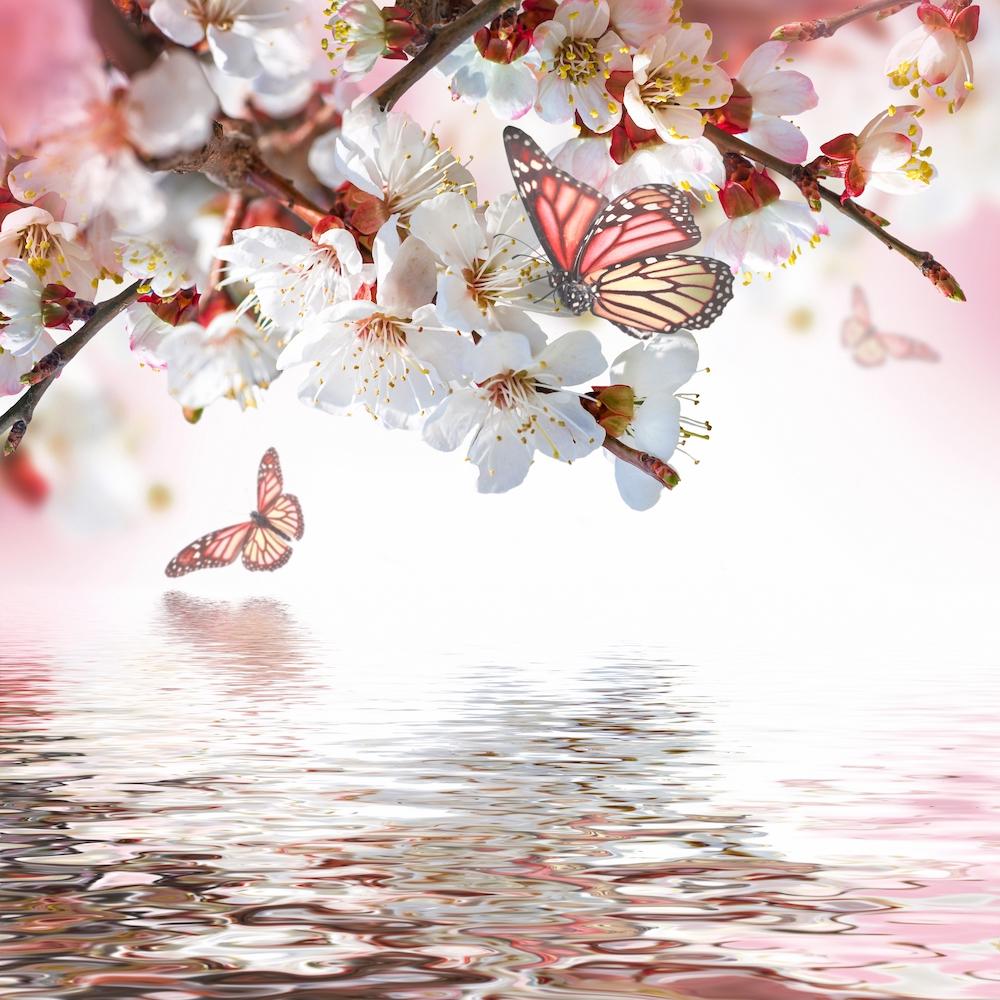 Fleur et papillon papiers peints photo 3D