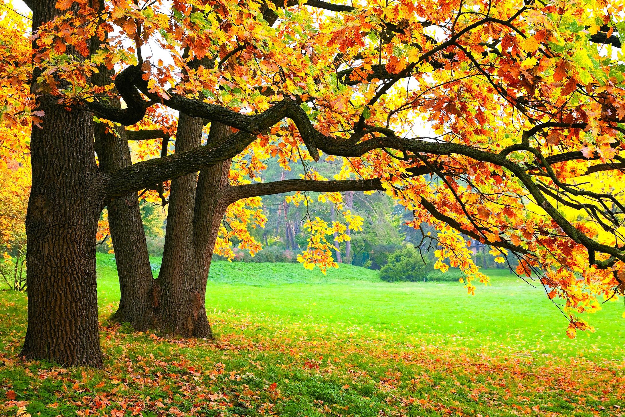 Beauté de l'automne papiers peints photo appliqué sur le mur