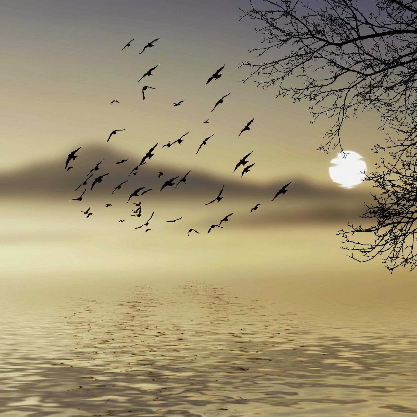 Dans la brume tapisserie
