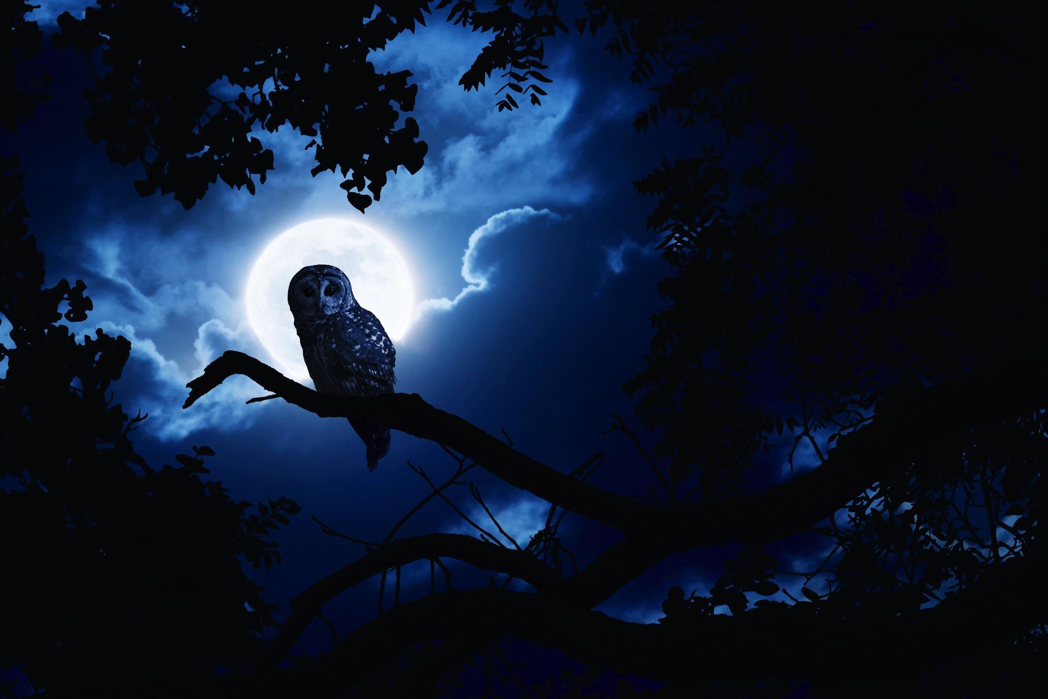 Oiseau de nuit papier peint