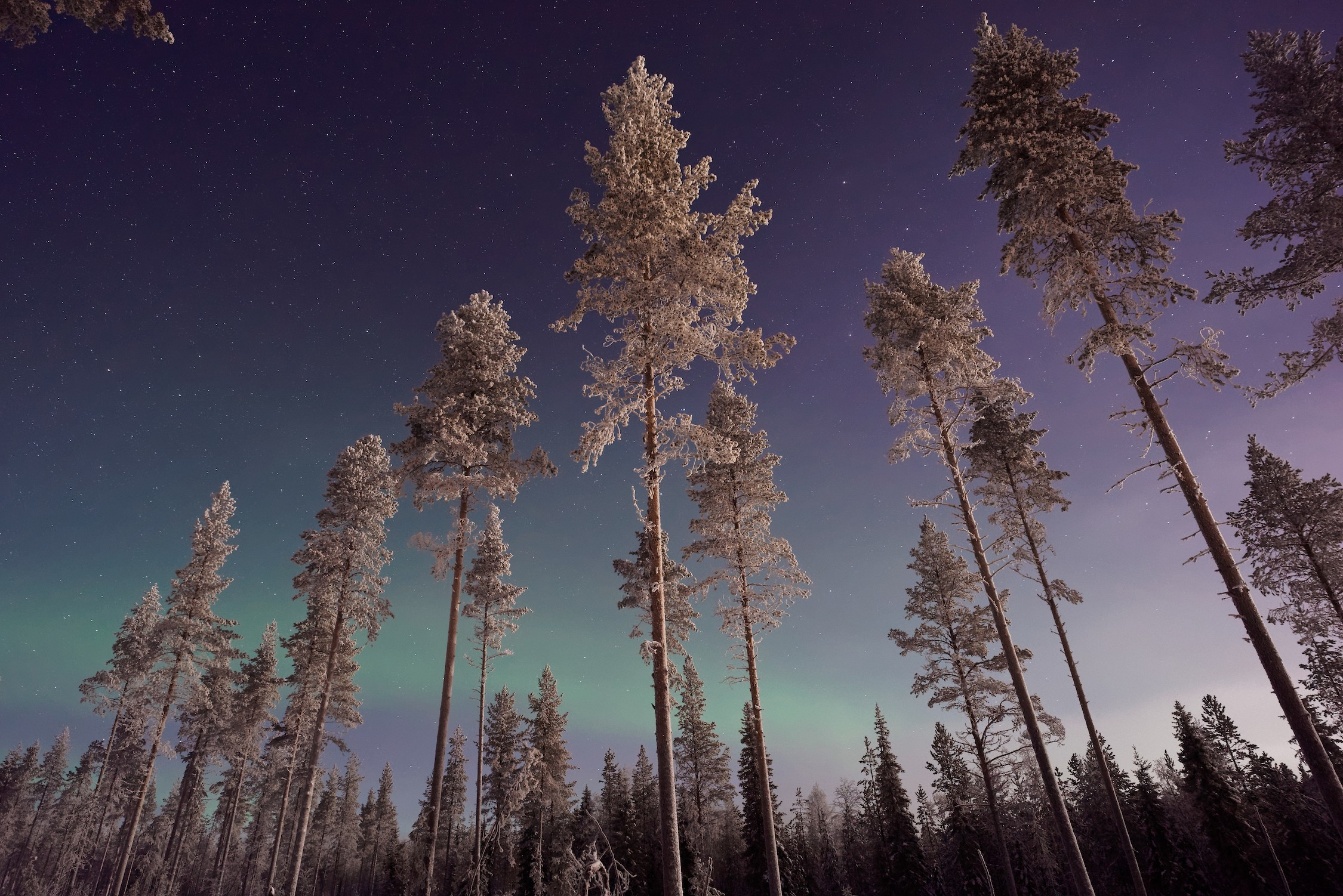 Les arbres touchent le ciel papier peint