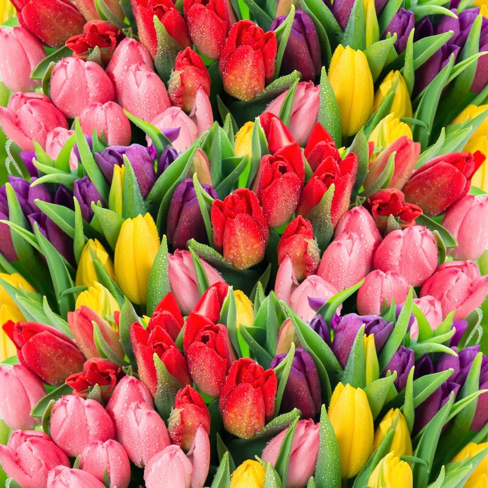 La beauté des tulipes decoration murale