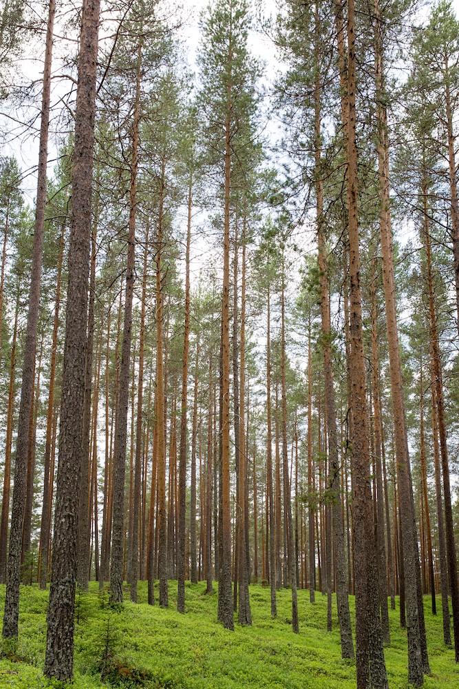 Forêt infinie et paix papiers peints photo