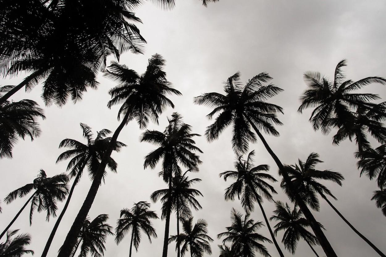 Palmiers en noir et blanc papier peint