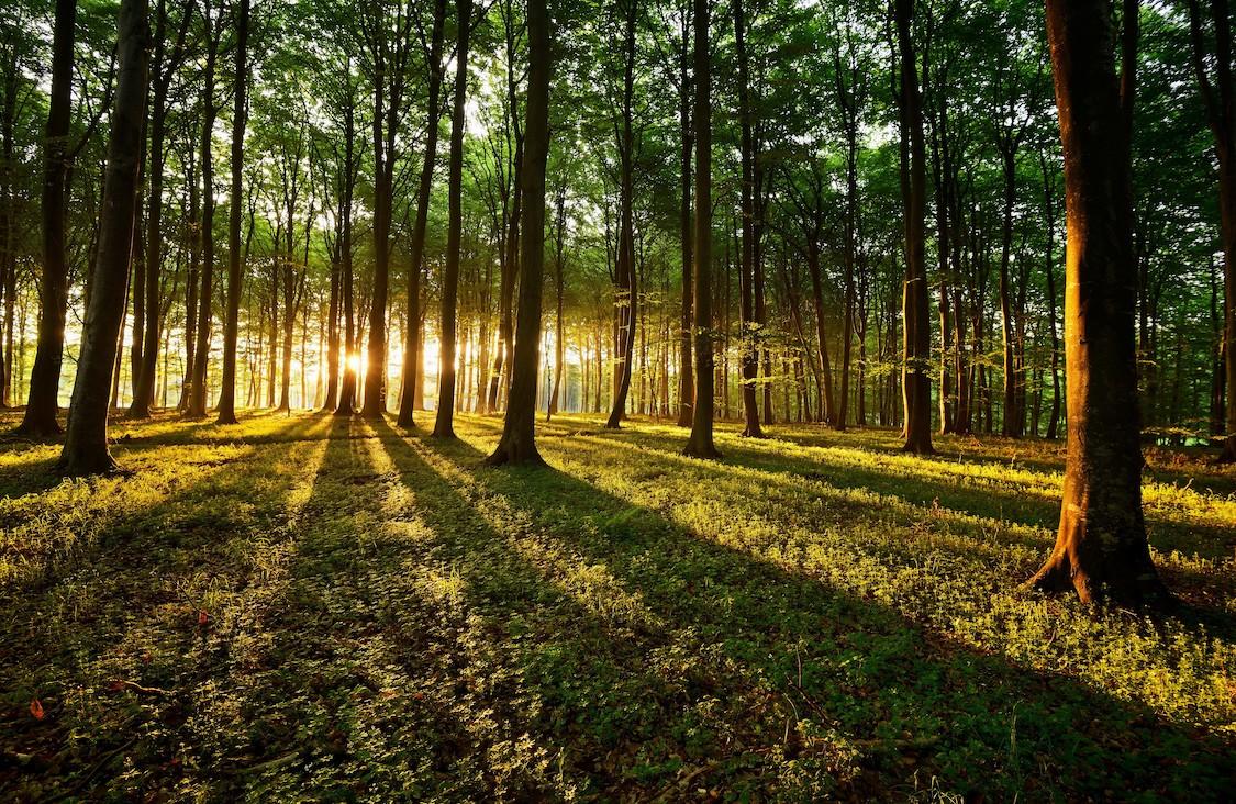 Forêt rougeoyante papiers peints photo