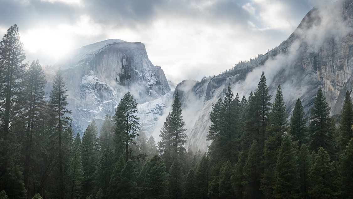 Forêt et neige dans le parc Yosemite papiers peints photo 3D