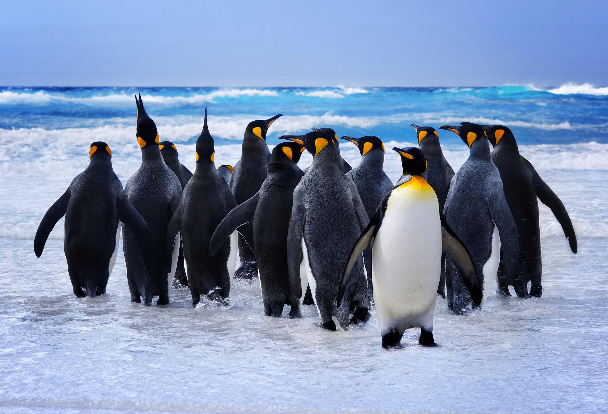Pingouins papiers peints photo 3D