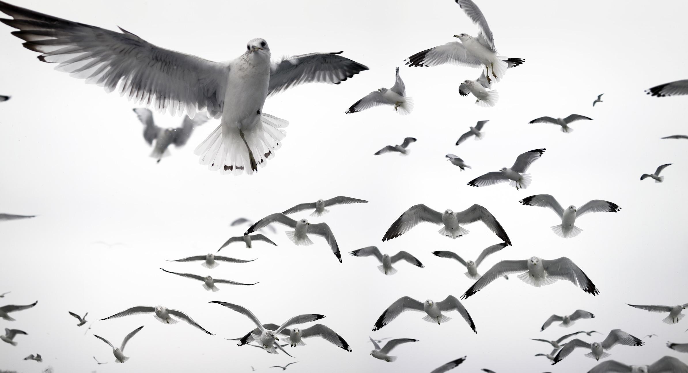 Oiseaux blancs tapisserie murale