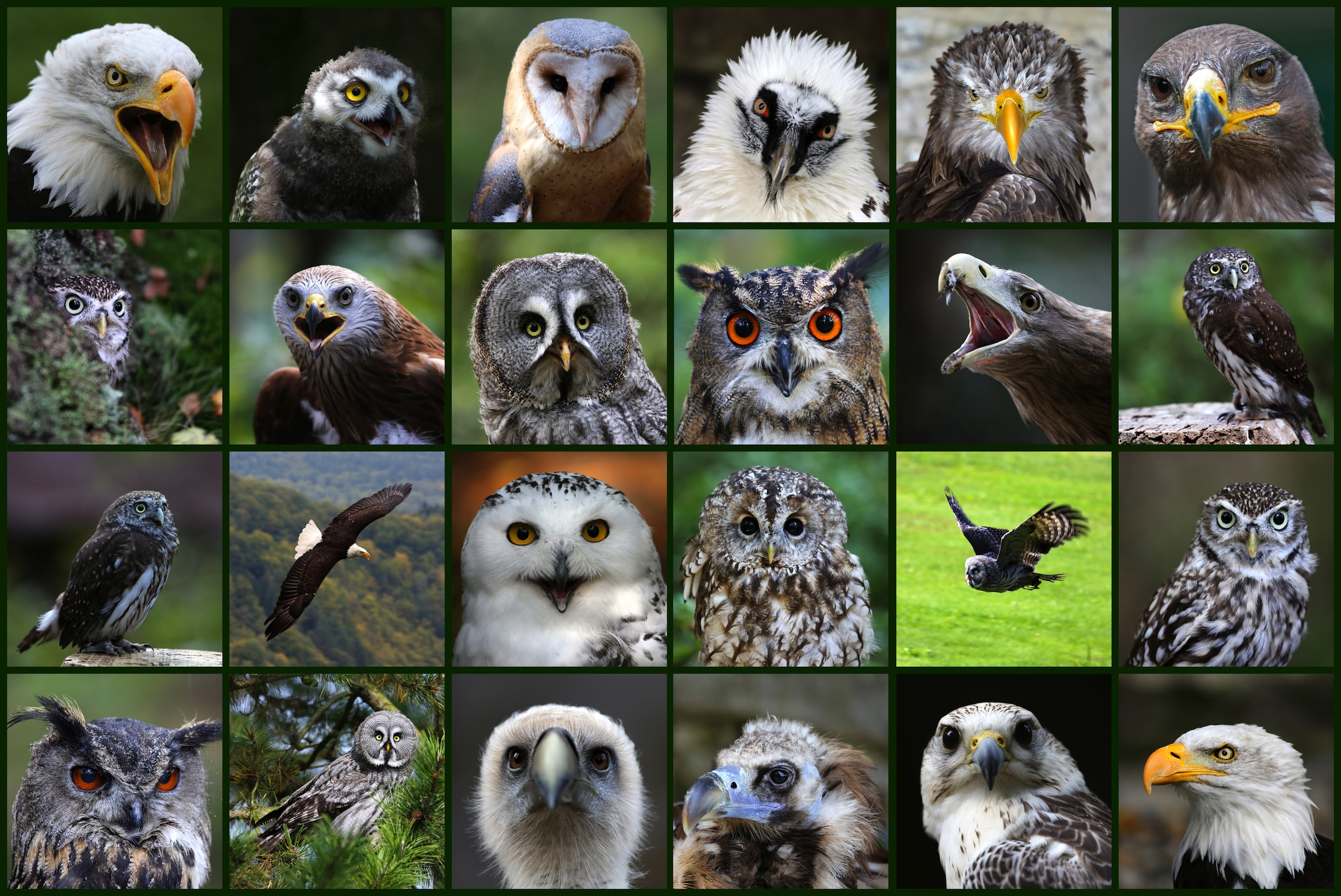 Langue des oiseaux decoration murale