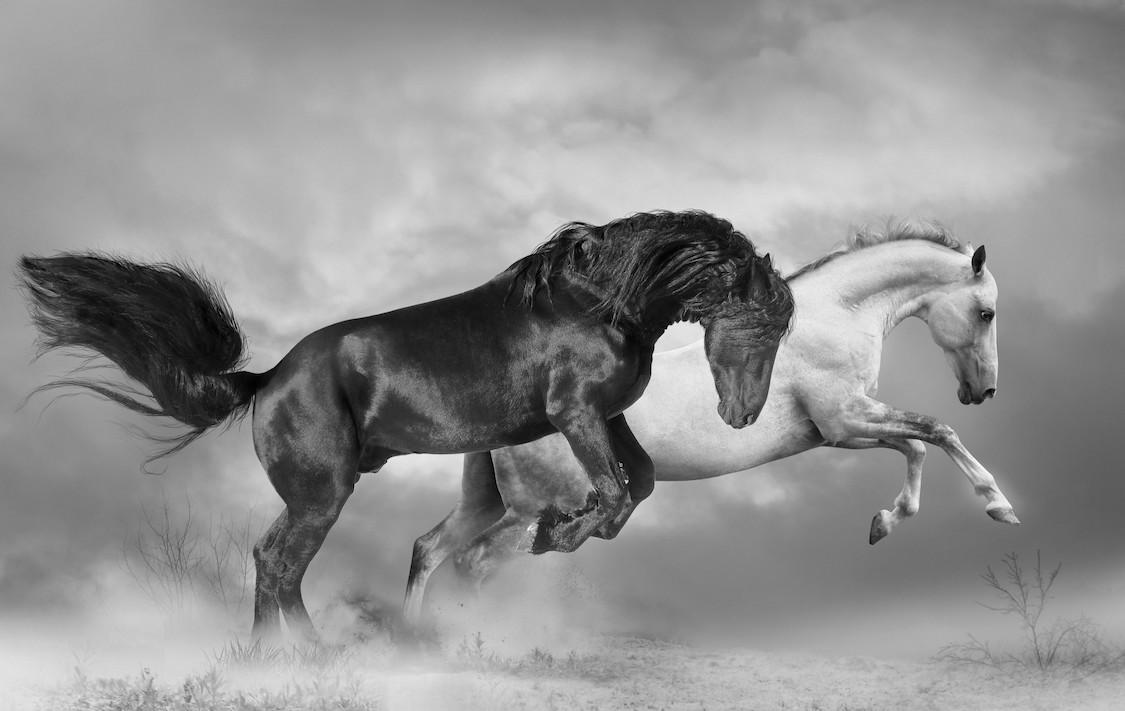 Élever des chevaux papier peint 3d